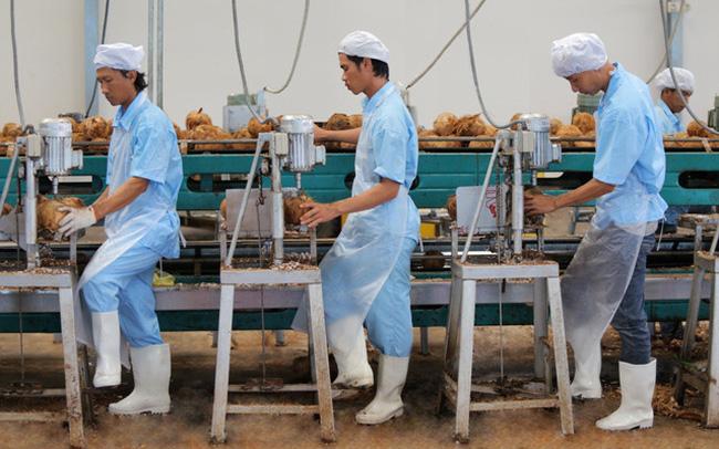 Bloomberg: Cơ hội cho ngành dừa Việt Nam từ nhu cầu ăn uống