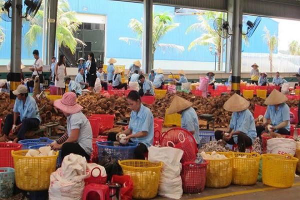 Giá trị vô hình của cây dừa